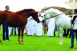 مربط دبي يفتح أبوابه أمام عشاق الخيل العربية الأصيلة