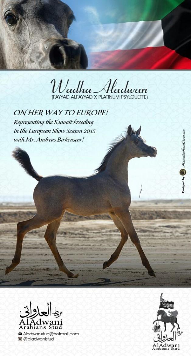 Wadha Aladwan .. To Europe!