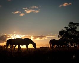 هكذا تُعالج أبرز أمراض الخيول خلال فصل الشتاء