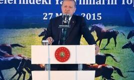 Erdoğan: Qatari emir sent 53 Arabian horses to Turkey