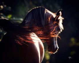 ألوان الخيول