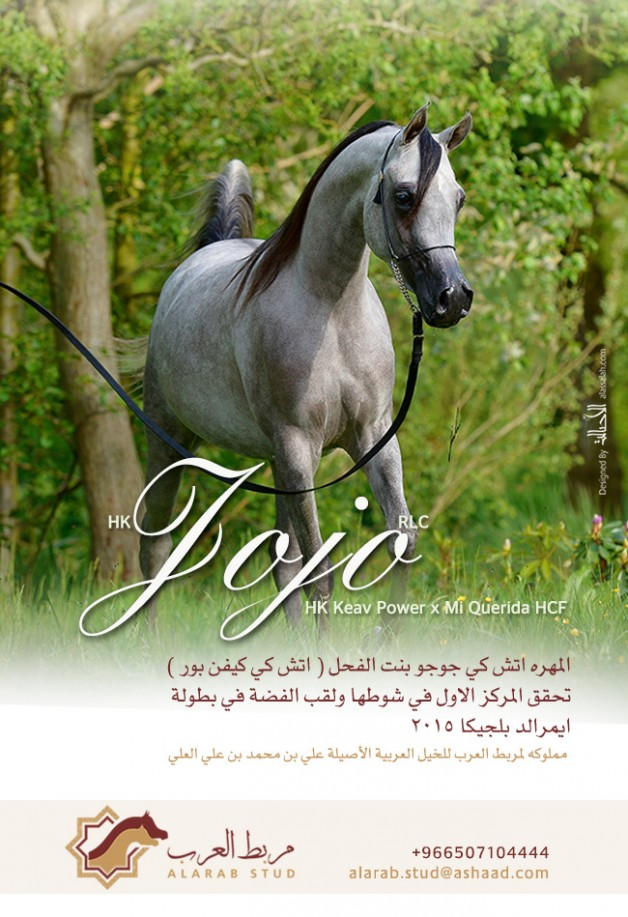 المهره «اتش كي جوجو» لمربط العرب تحقق فضة ايميرالد ببلجيكا
