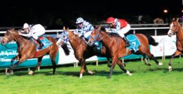 ذرية «منجر» تسيطر على سباقات الخيول العربية