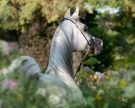 عاشق للخيل في بريطانيا يطلب لقاء حصانه قبل الوفاة