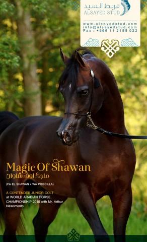 Feel the MAGIC in PARIS | MAGIC OF SHAWAN
