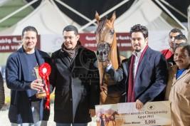 المنافسة تستمر ببطولة «الجواد العربي» الخامسة لمربي الخيل العربية الأصيلة بمصر – مقتطفات اليوم الثاني