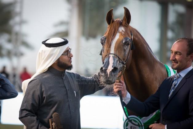 """عشاق الخيول العربية الأصيلة يودعون البطل """"ايدن سي"""" 2005 – 2020 – انجازات وصور"""