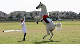 Video: Extraordinary horse trots into the record books on its hind legs