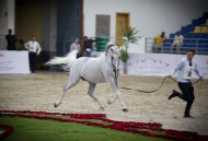 The 20th Sharjah International Arabian Horse Festival