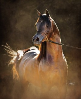 Phosphorus in My Horse's Diet: What is it Good For?