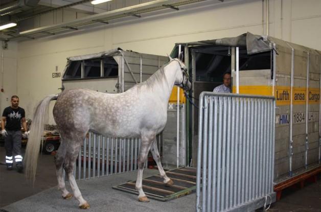 نقل الخيول