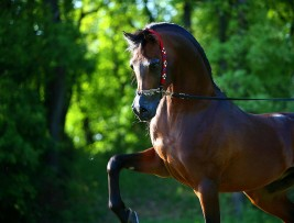 Copper's Impact on Equine Coat Color