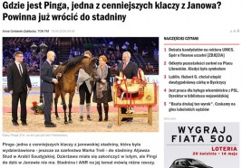 Where is Pinga!؟, One of the Most Valuable Mares in Janów Stud? She should go back to the Stud