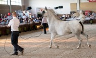 A U.S. breeder of Arabian horses says he is shunning a well-regarded auction in Poland this year because the experienced heads of stud farms that have held the event for decades have been sacked