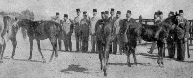 مزاد خيل عباس باشا.. عمره أكثر من مائة وخمسين عاما!