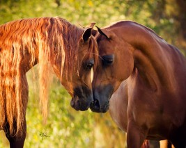 Are the equine redheads really the tempests of the horse world?