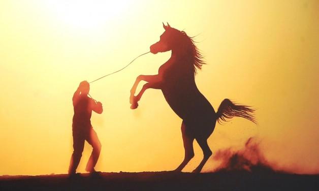 تصوير الخيول العربية