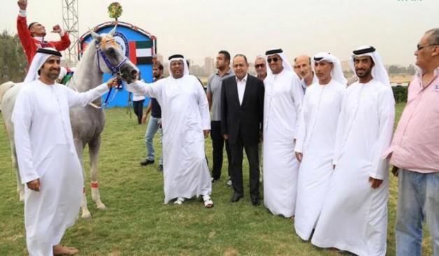 """""""المهند اخناتون"""" بطلا للجولة الأولى لكأس رئيس دولة الامارات للخيول العربية الأصيلة في مصر"""
