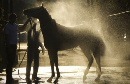 Keep Your Horse Cool in the Summer Heat