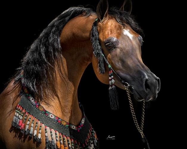 ما الذي يمكن أن تقوله لكم غرة الحصان؟