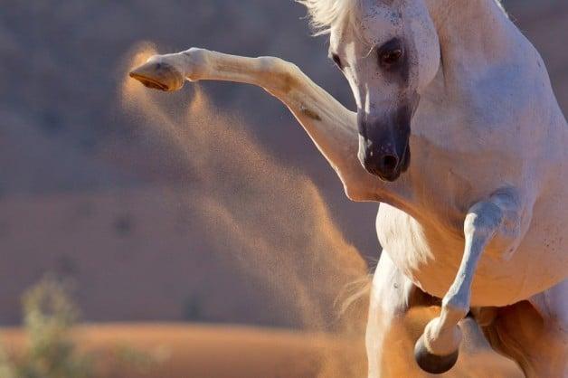 إدارة الخيول المتوترة!