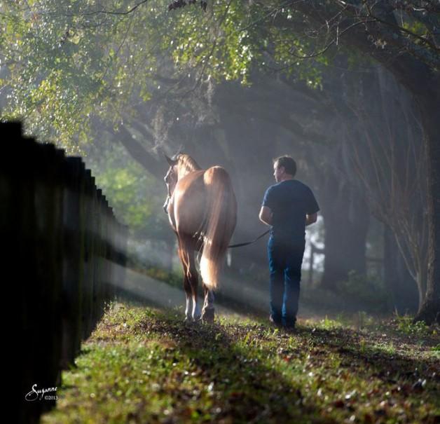 """دراسة تؤكد أن الخيول """" تخاطب"""" السيَّاس"""