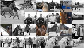 Photo Gallery for Menton 2016 International Arabian Horses championship by: Anette Varjonen
