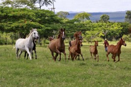"""بيت """"آر إف آي مكتوب"""" .. مقابلة مع مالك مزرعة (هاراس آر إف آي) لتربية الخيول العربية بالبرازيل"""