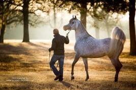 Understanding horse intelligence