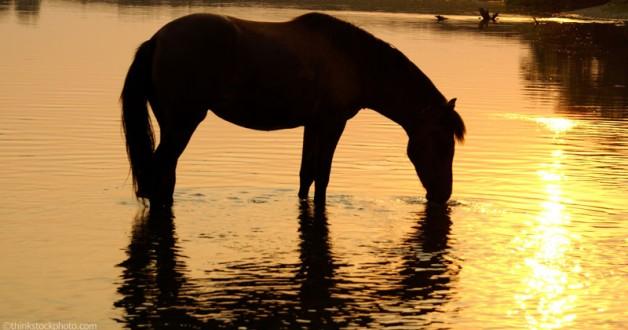 الخيول وفقدان السوائل