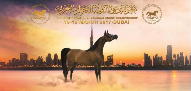 بدء التسجيل ببطولة دبي الدولية ٢٠١٧ للجواد العربي – رابط التسجيل