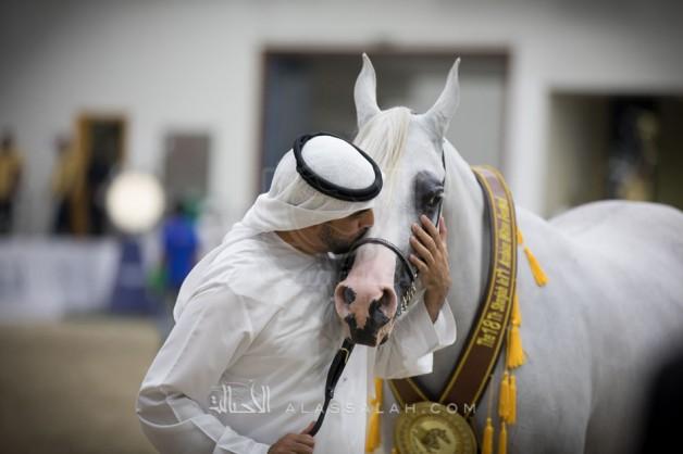 «البداير» و«البيداء» و«دبي» و«الأريام»  أبطال ذهب (الشارقة الـ ١٨)  للجواد العربي – النتائج النهائية بالصور