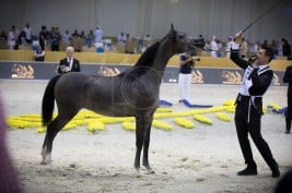 Dubai International Arabian Horse Show 2018 attracted over 220 horses from over 20 countries
