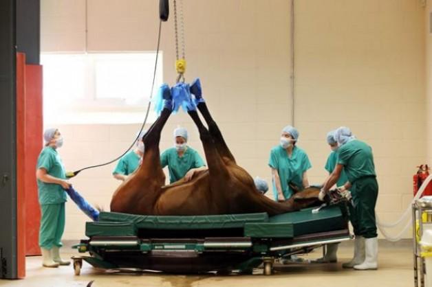 غداً .. توقيع اتفاقية تشغيل مستشفى للخيول بالسعودية بمواصفات عالمية