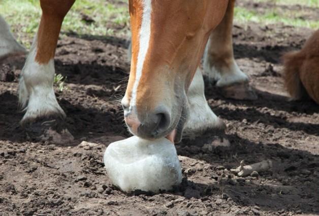 الملح للخيول مع ارتفاع درجات الحرارة
