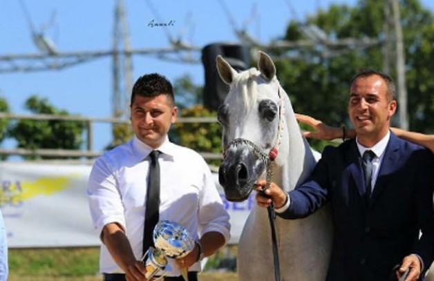 (الريان) و(الشقب) و(دبي) أبطال (بيرغامو الدولية 2017) لجمال الخيل العربية بإيطاليا – النتائج النهائية