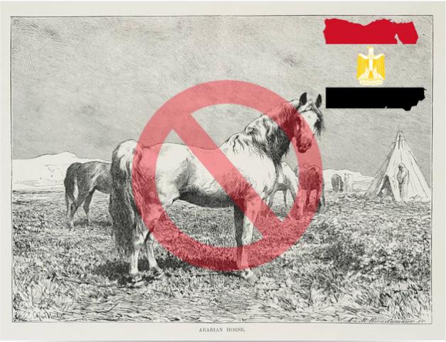 المملكة تحظر الاستيراد من جمهورية مصر العربية