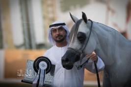 إنجازان جديدان للبداير في بطولة ابوظبي الدولية 2018 لجمال الخيل العربية