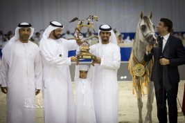 «عجمان» يشع بريقاً في «دبي ٢٠١٨ » للجواد العربي بثلاث القاب (ذهبيتين وبرونز)