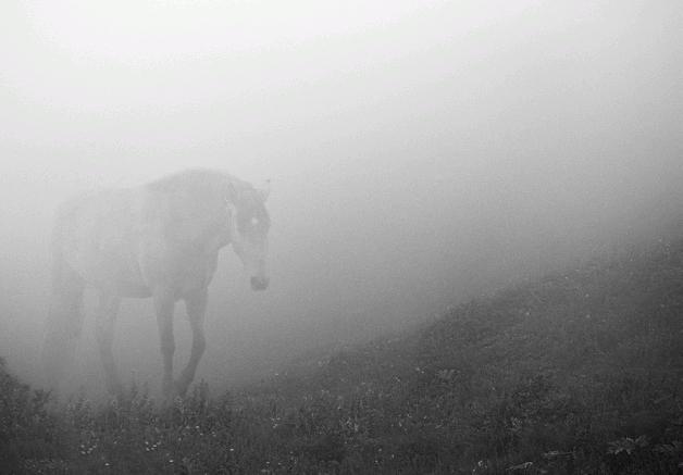 سلطة العقبة بالأردن: نفوق الخيول سببه سوء التغذية