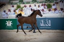 برنامج بطولة الانتاج المحلي التاسعة 2020 لجمال الخيل العربية بالطائف