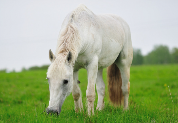 الخيول المسنة تعالج الاضطرابات النفسية لدى الأطفال