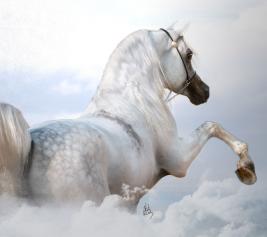الفقرات الخمس تميز الخيول العربية عن باقي سلالات الخيل