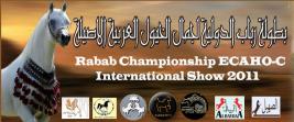ختام مميز لبطولة رباب الدولية لجمال الخيول العربية بمصر