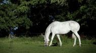 خبير في (الزراعة) يؤكد اهمية المواد الغذائية المستخرجة من المواد الطبيعية لتربية الخيول