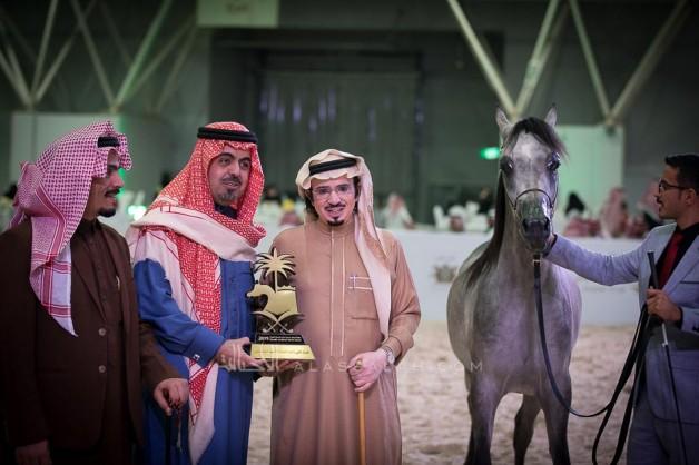 نتائج اليوم الثاني لبطولة الرياض 2019 لجمال الخيل العربية الأصيلة