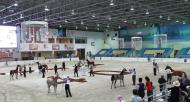عبد الله بن ماجد: مهرجان الجواد العربي نجاح للانتاج المحلي