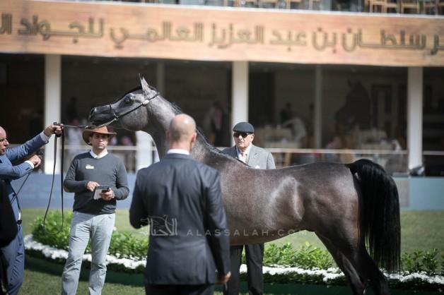 نتائج اليوم الثاني لبطولة جمال الخيل العربية بمهرجان الأمير سلطان العالمي 2019