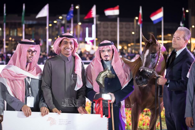 The final results of the Asharqia Arabian Horse Classic 2019