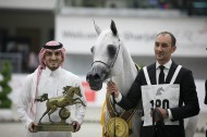 """Pepita"" wins the golden medal in the Mares Championship for Akmal Stud"